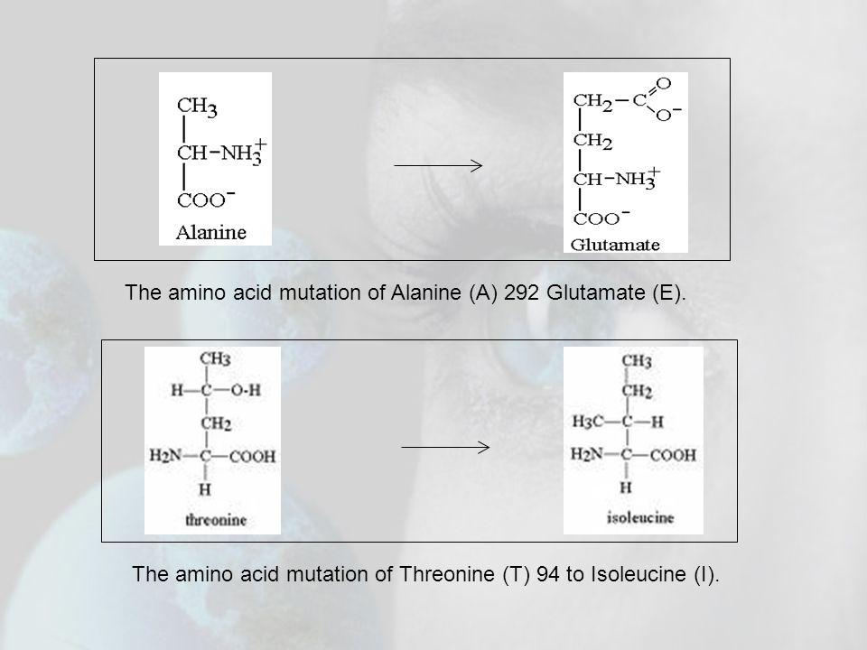 The amino acid mutation of Threonine (T) 94 to Isoleucine (I). The amino acid mutation of Alanine (A) 292 Glutamate (E).