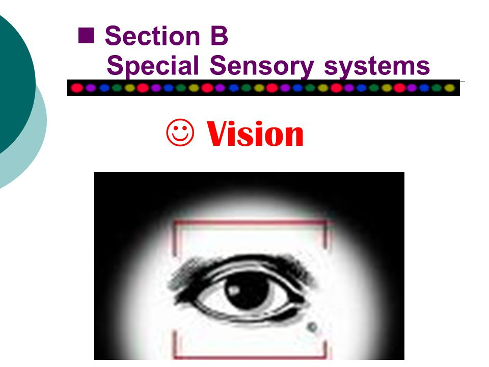 Vision Section B Special Sensory systems
