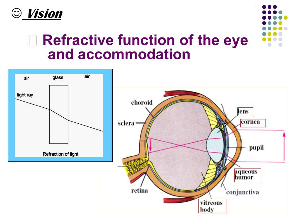 Vision Ⅰ Refractive function of the eye and accommodation