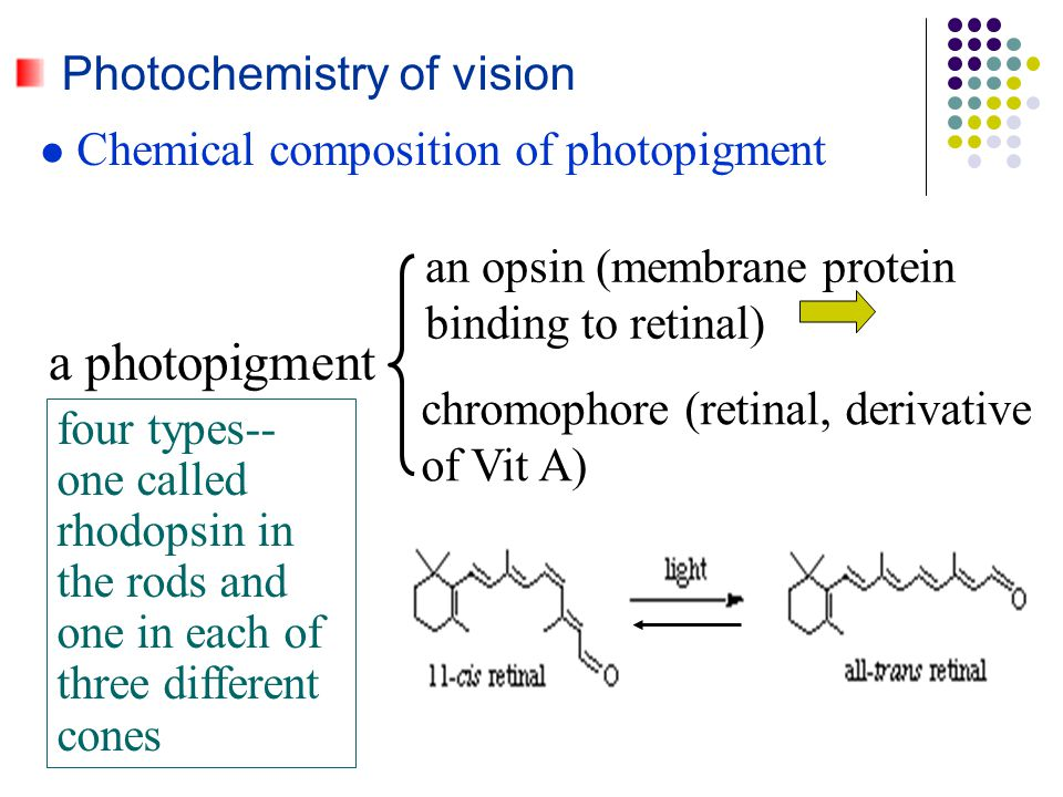 Photochemistry of vision Chemical composition of photopigment a photopigment four types-- one called rhodopsin in the rods and one in each of three di