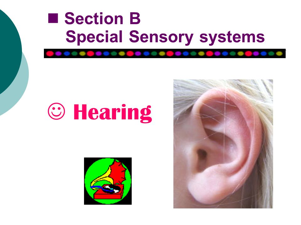 Hearing Section B Special Sensory systems