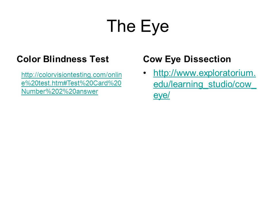 The Eye Color Blindness TestCow Eye Dissection http://www.exploratorium.