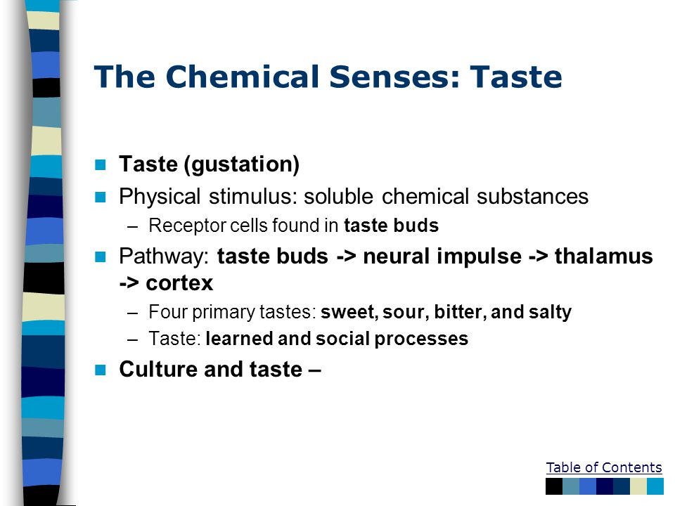 Table of Contents The Chemical Senses: Taste Taste (gustation) Physical stimulus: soluble chemical substances –Receptor cells found in taste buds Pathway: taste buds -> neural impulse -> thalamus -> cortex –Four primary tastes: sweet, sour, bitter, and salty –Taste: learned and social processes Culture and taste –