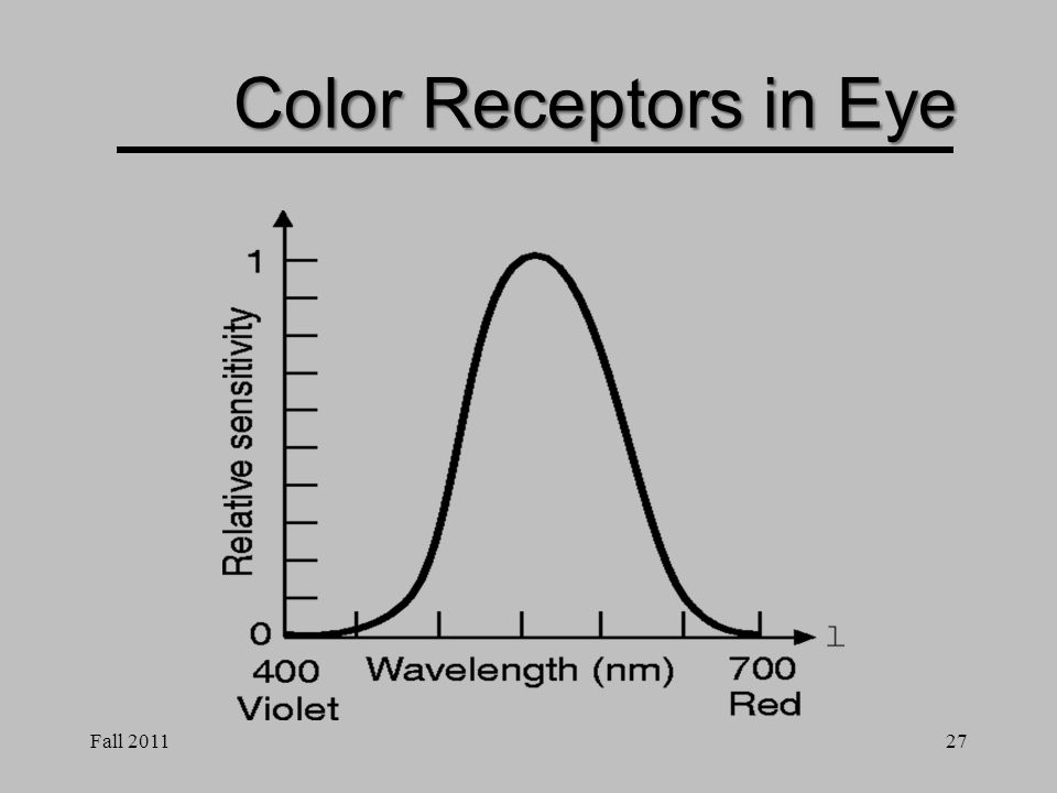 Fall 201126 Color Receptors in Eye Red, Green, Blue Long, Medium, Short