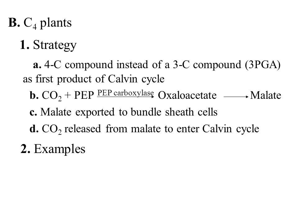 B. C 4 plants 1. Strategy a.