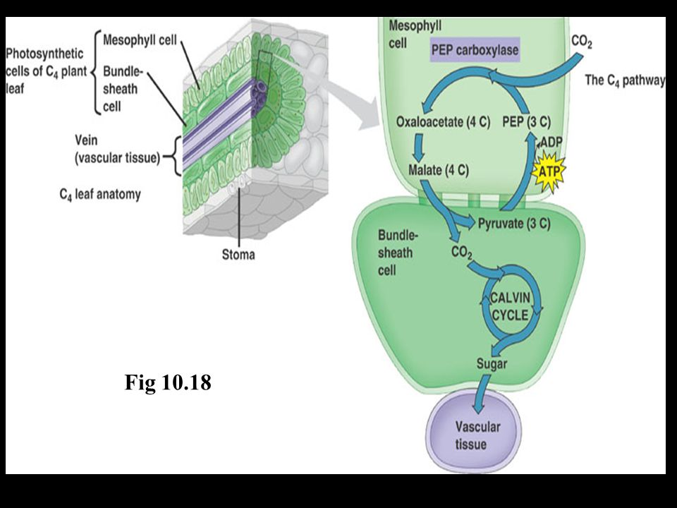Fig 10.18