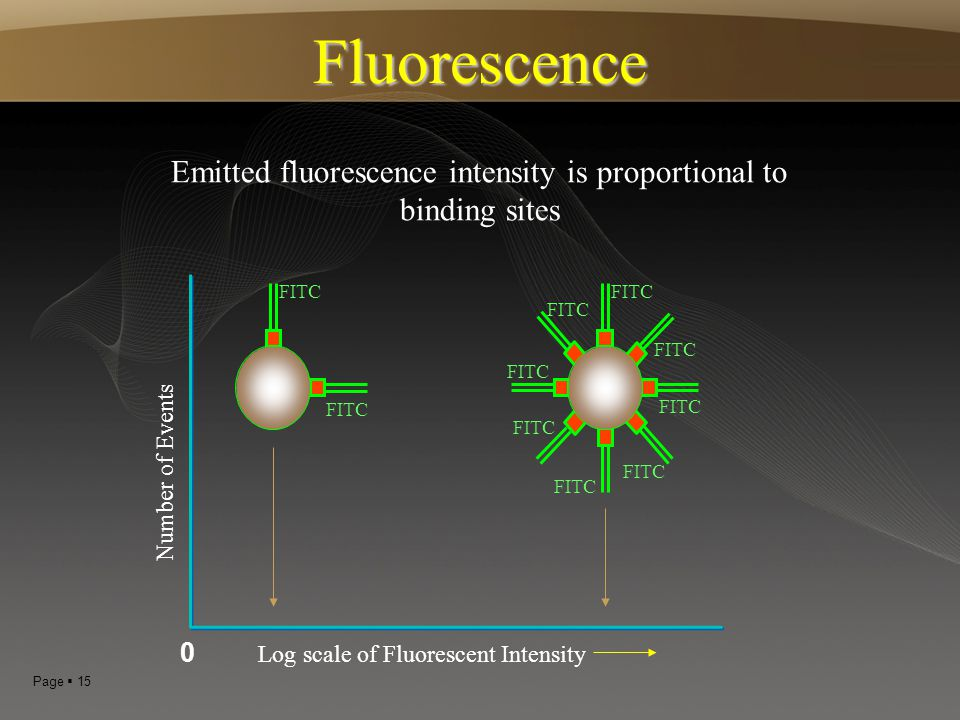 Page  15 FITC Emitted fluorescence intensity is proportional to binding sites FITC Log scale of Fluorescent Intensity Number of Events Fluorescence 0