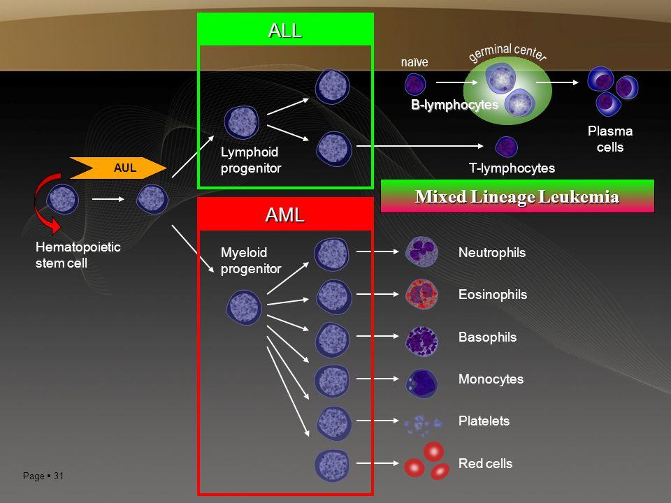 Page  31 Hematopoietic stem cell Neutrophils Eosinophils Basophils Monocytes Platelets Red cells Myeloid progenitor Lymphoid progenitor B-lymphocytes