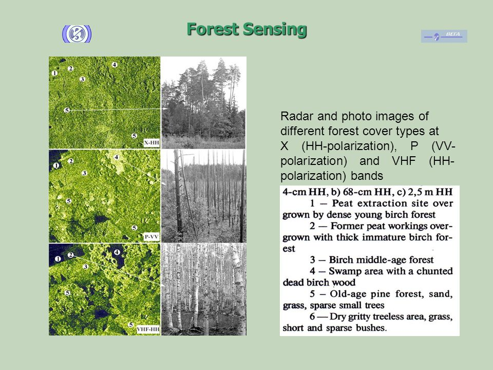 Forest Sensing Radar and photo images of different forest cover types at X (HH-polarization), P (VV- polarization) and VHF (HH- polarization) bands