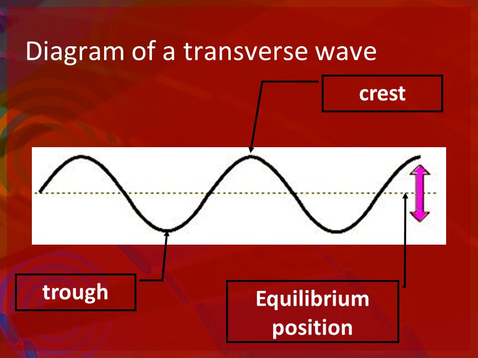 Diagram of a transverse wave Equilibrium position crest trough