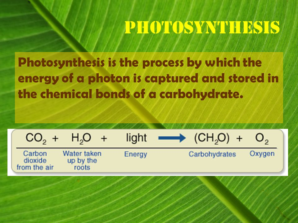 Photosynthesis Photosynthesis is the process by which the energy of a photon is captured and stored in the chemical bonds of a carbohydrate.