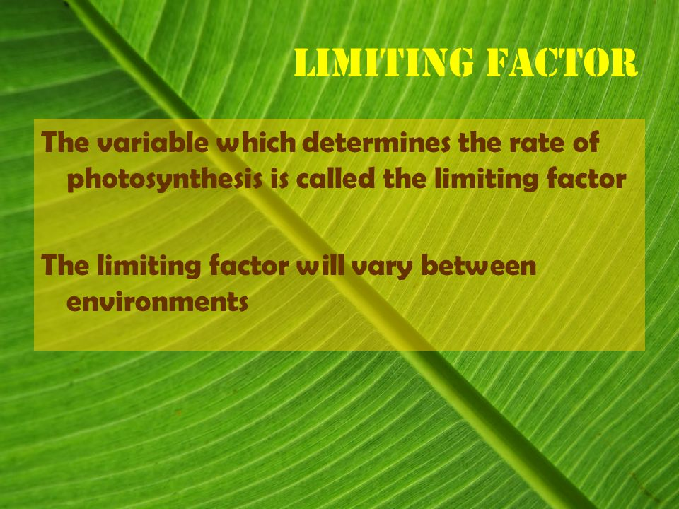 Limiting Factor The variable which determines the rate of photosynthesis is called the limiting factor The limiting factor will vary between environments
