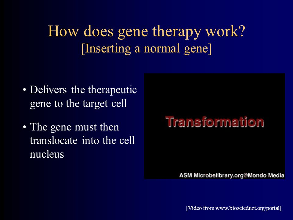 How does gene therapy work? [Inserting a normal gene] Delivers the therapeutic gene to the target cell The gene must then translocate into the cell nu