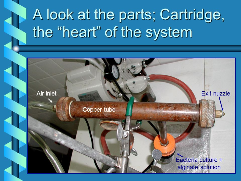 A look at the parts; Cartridge, the heart of the system Copper tube Air inlet Bacteria culture + alginate solution Exit nuzzle
