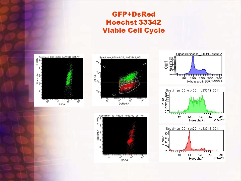 GFP+DsRed Hoechst 33342 Viable Cell Cycle