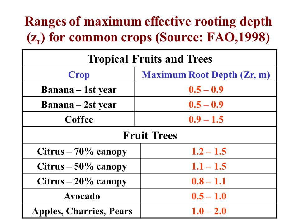 Ranges of maximum effective rooting depth (z r ) for common crops (Source: FAO,1998) Tropical Fruits and Trees Maximum Root Depth (Zr, m)Crop 0.5 – 0.9Banana – 1st year 0.5 – 0.9Banana – 2st year 0.9 – 1.5Coffee Fruit Trees 1.2 – 1.5Citrus – 70% canopy 1.1 – 1.5Citrus – 50% canopy 0.8 – 1.1Citrus – 20% canopy 0.5 – 1.0Avocado 1.0 – 2.0Apples, Charries, Pears