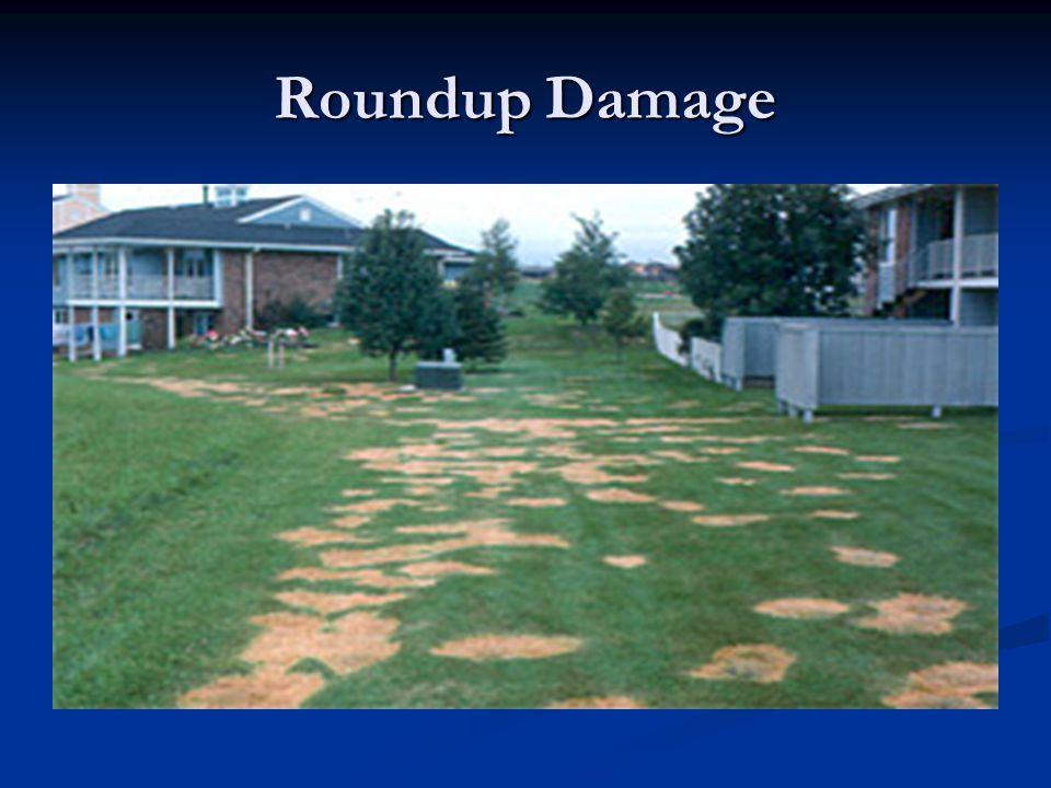 Roundup Damage