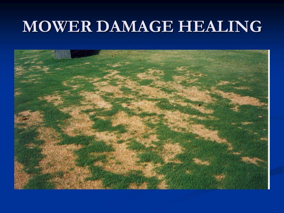 MOWER DAMAGE HEALING