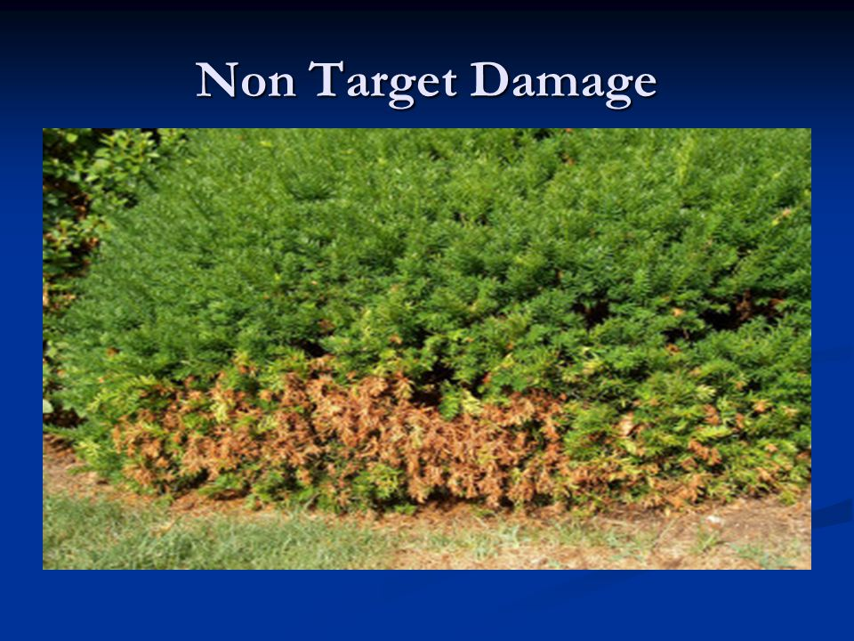 Non Target Damage