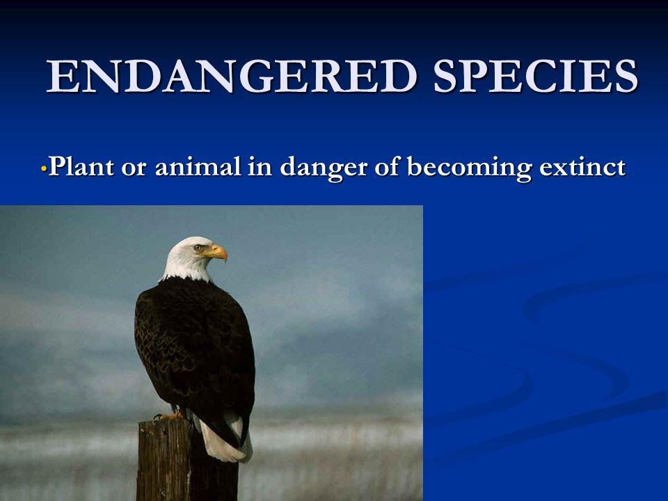 ENDANGERED SPECIES Plant or animal in danger of becoming extinct Plant or animal in danger of becoming extinct