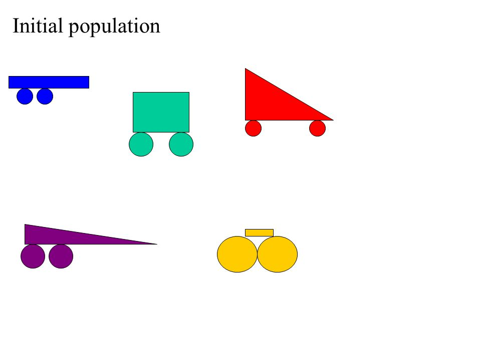 Initial population