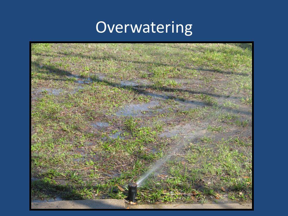 Overwatering