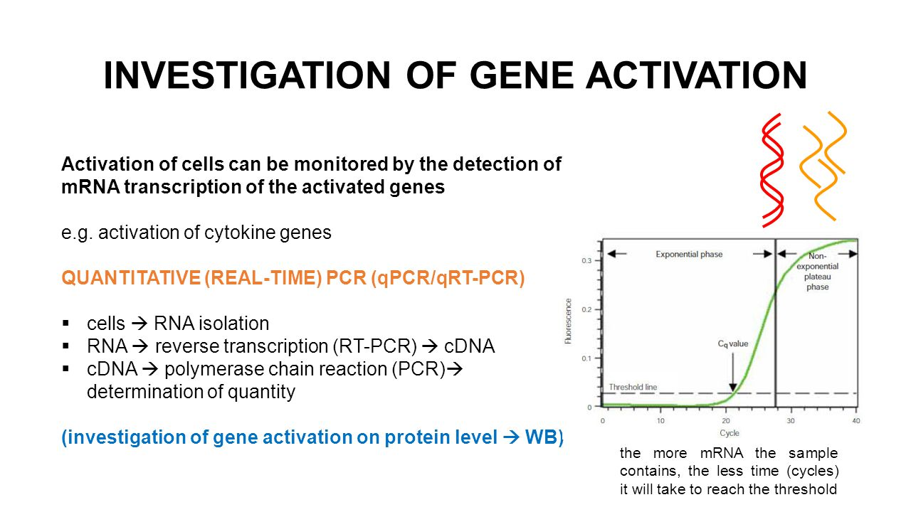 Activation of cells can be monitored by the detection of mRNA transcription of the activated genes e.g.