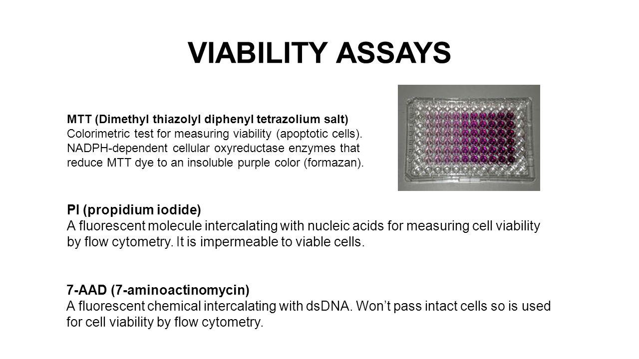 VIABILITY ASSAYS MTT (Dimethyl thiazolyl diphenyl tetrazolium salt) Colorimetric test for measuring viability (apoptotic cells).