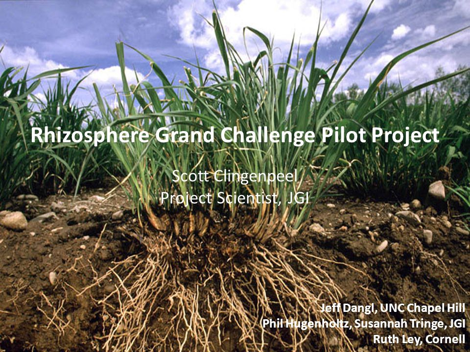Jeff Dangl, UNC Chapel Hill Phil Hugenholtz, Susannah Tringe, JGI Ruth Ley, Cornell Rhizosphere Grand Challenge Pilot Project Scott Clingenpeel Project Scientist, JGI