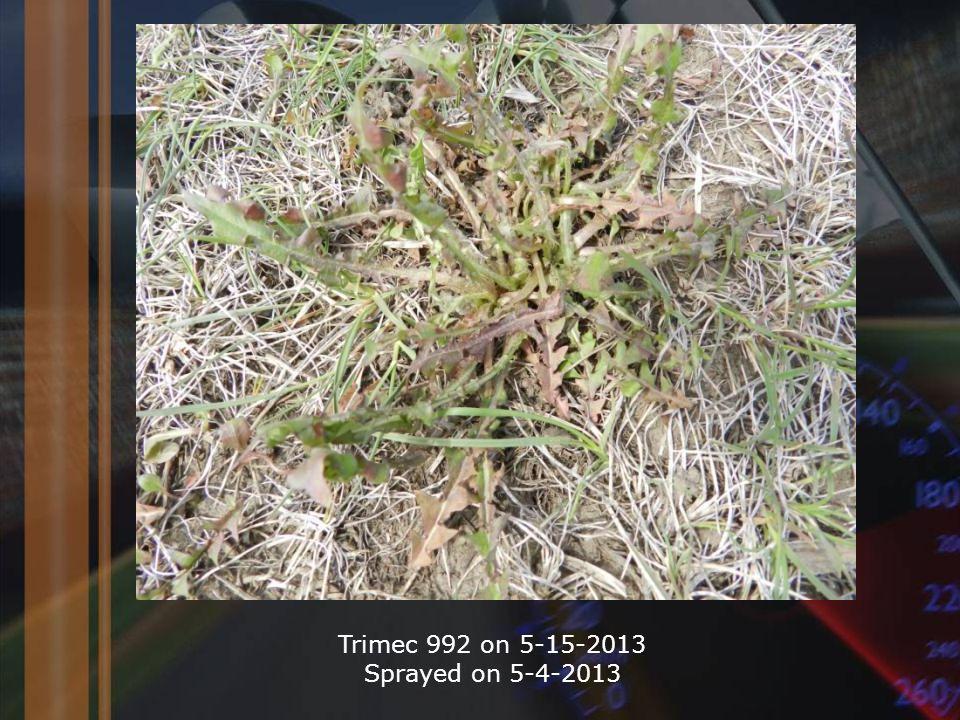 Trimec 992 on 5-15-2013 Sprayed on 5-4-2013