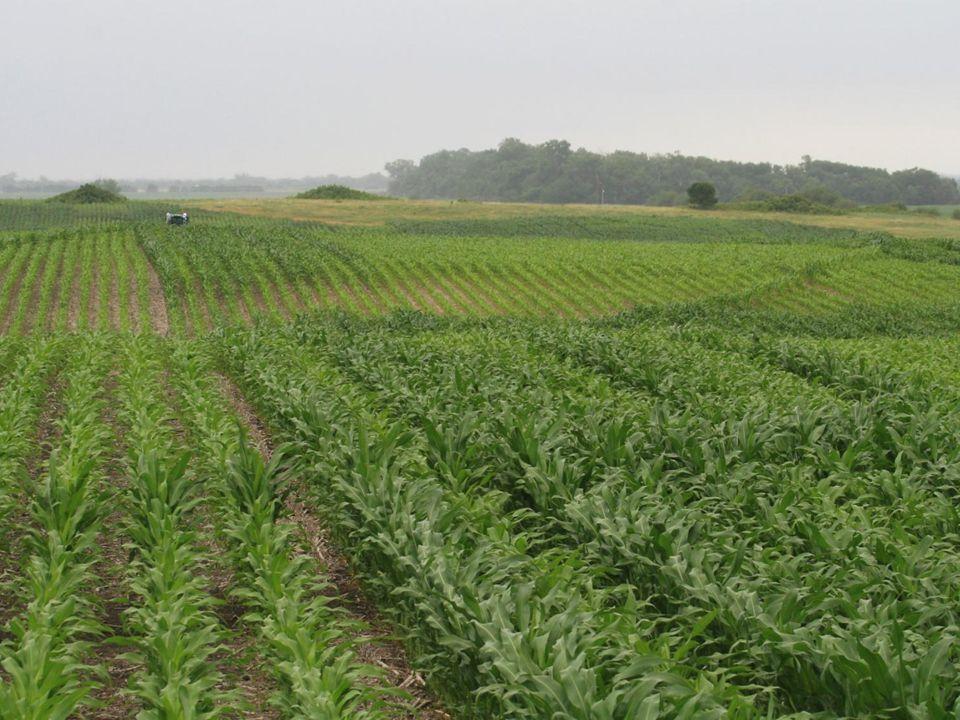 Apparent soil deep electrical conductivity overlaid on elevation Grain yield overlaid on elevation
