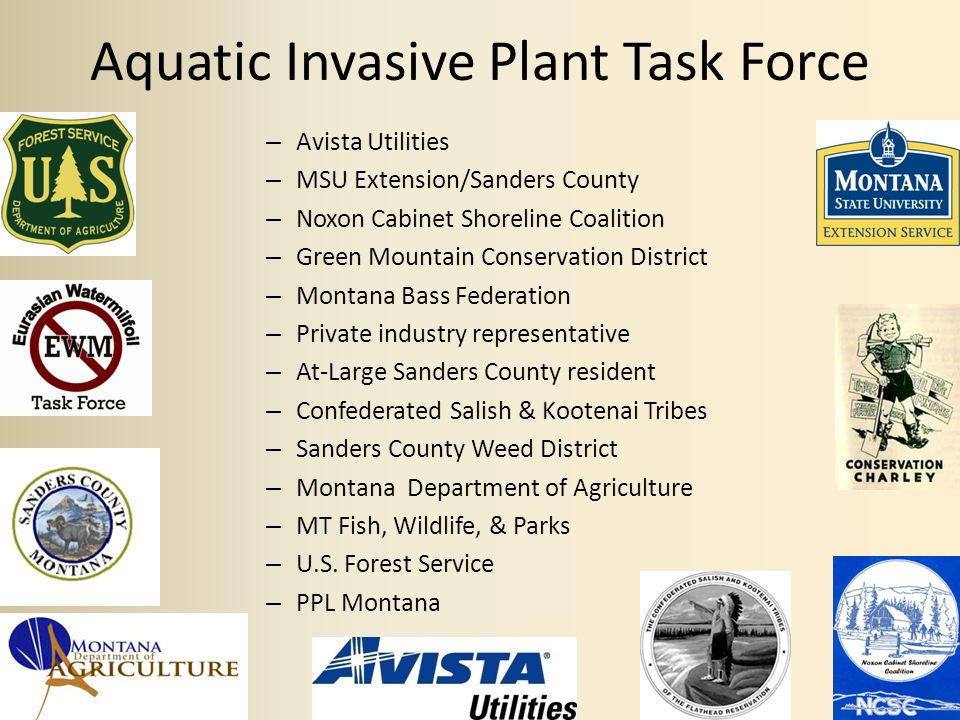 AIP Task Force Goals Effectively manage Eurasian watermilfoil Reduce the risk of spread of this plant and other aquatic invasive plants Implement an aggressive Integrated Weed Management Program on the two reservoirs Post-Treatment Eurasian Watermilfoil with healthy Elodea from the same rake pull.