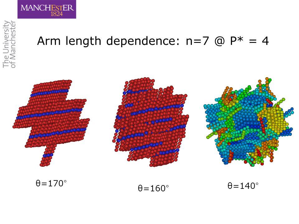18 Arm length dependence: n=7 @ P* = 4 θ=170° θ=160° θ=140°