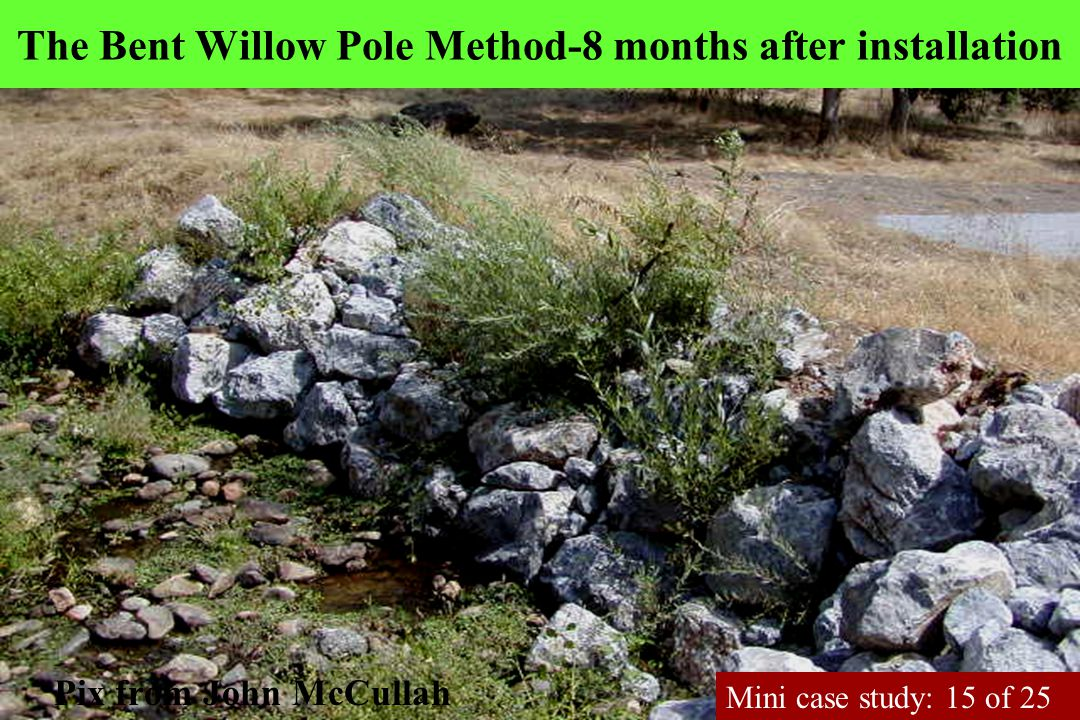 The Bent Willow Pole Method-8 months after installation Pix from John McCullah Mini case study: 15 of 25
