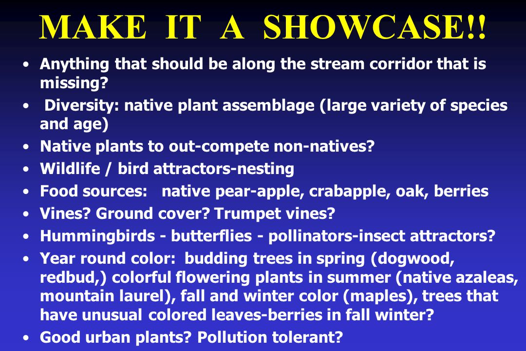 MAKE IT A SHOWCASE!! Anything that should be along the stream corridor that is missing? Diversity: native plant assemblage (large variety of species a