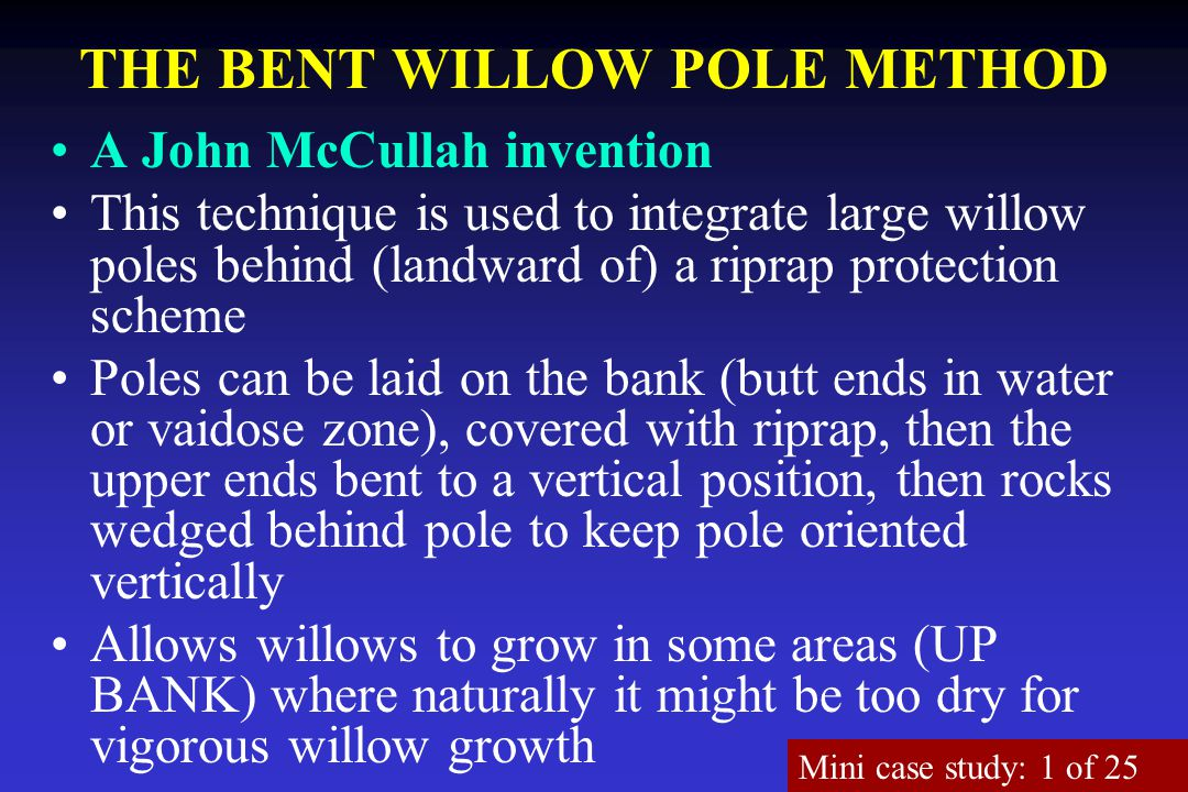 THE BENT WILLOW POLE METHOD A John McCullah invention This technique is used to integrate large willow poles behind (landward of) a riprap protection