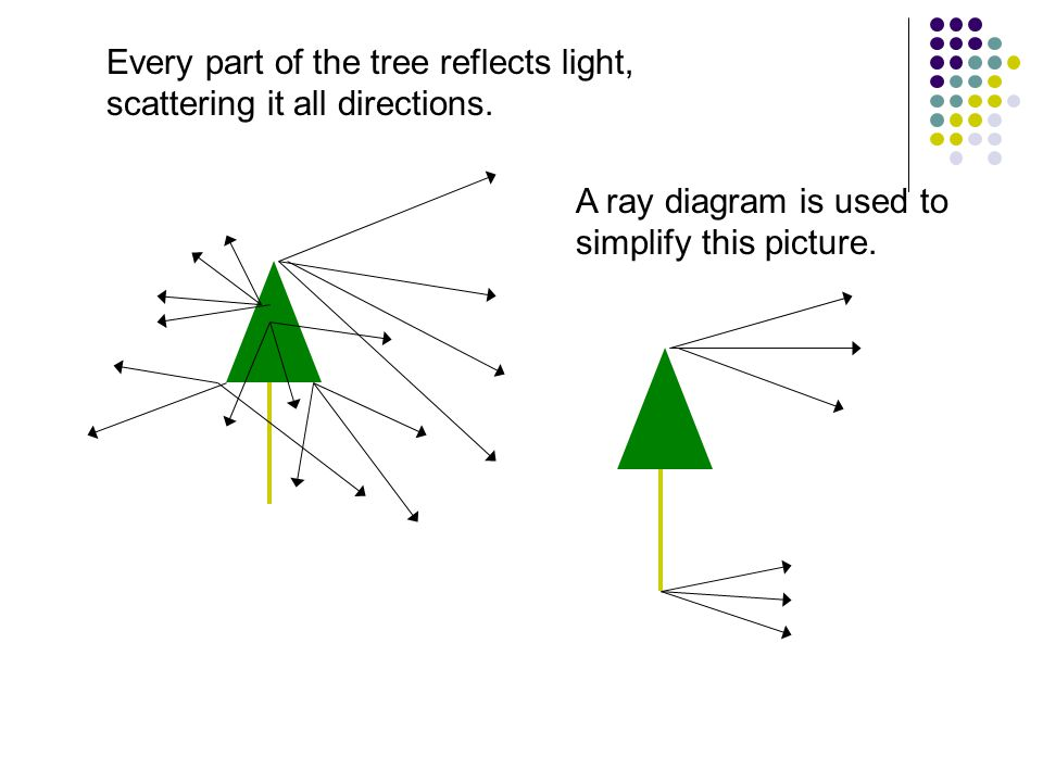 Every part of the tree reflects light, scattering it all directions. A ray diagram is used to simplify this picture.