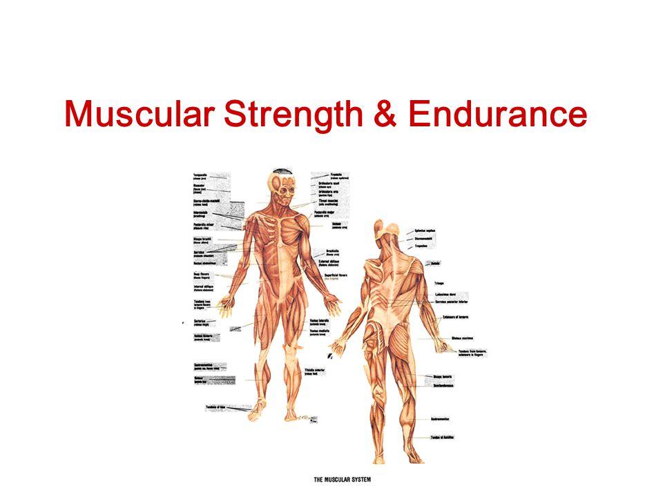 Muscular Strength & Endurance