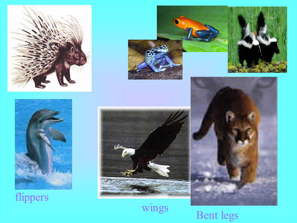 flippers wings Bent legs
