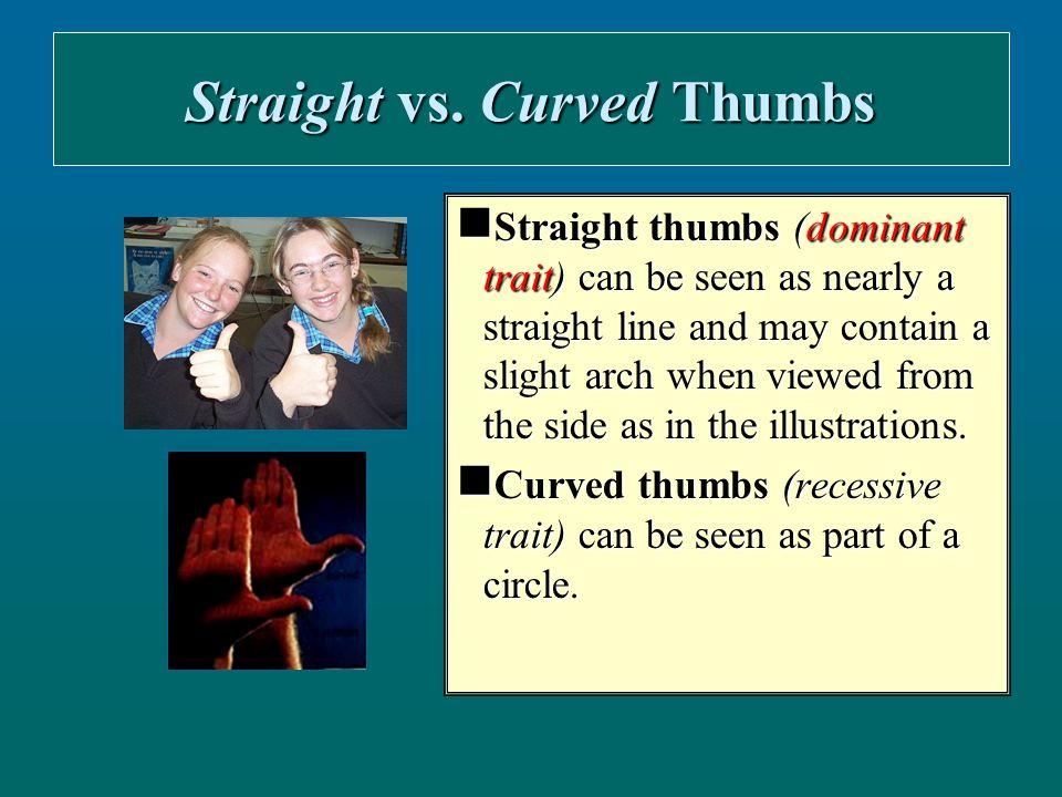 Bent vs.Straight Pinky Bent pinky (dominant trait) vs.