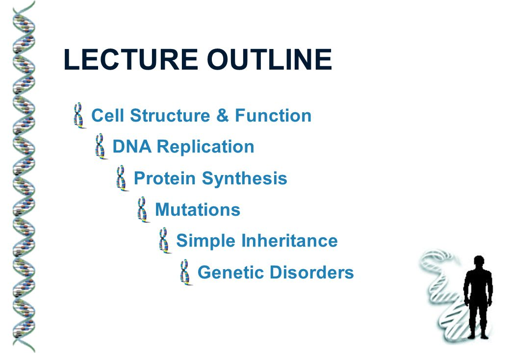 LECTURE OUTLINE Cell Structure & Function DNA Replication Protein Synthesis Mutations Simple Inheritance Genetic Disorders