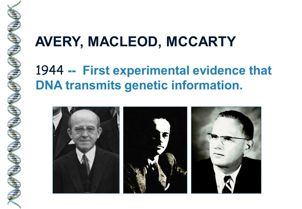 1944 -- First experimental evidence that DNA transmits genetic information. AVERY, MACLEOD, MCCARTY