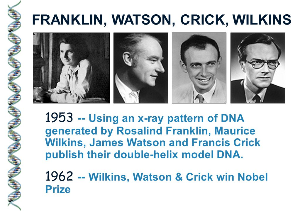 1953 -- Using an x-ray pattern of DNA generated by Rosalind Franklin, Maurice Wilkins, James Watson and Francis Crick publish their double-helix model DNA.