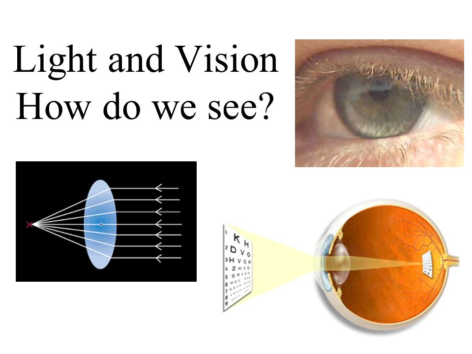 Light and Vision How do we see?