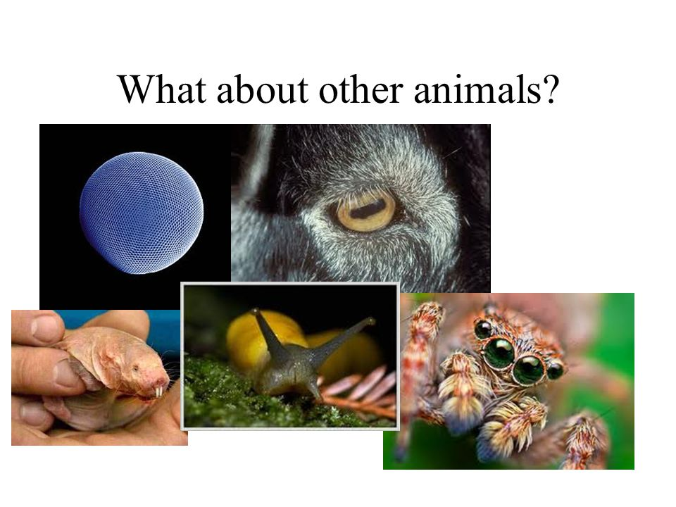 What about other animals?