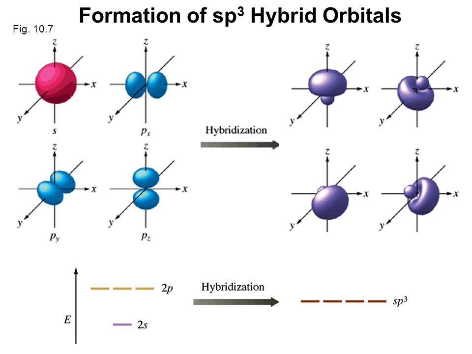 30 Formation of sp 3 Hybrid Orbitals Fig. 10.7