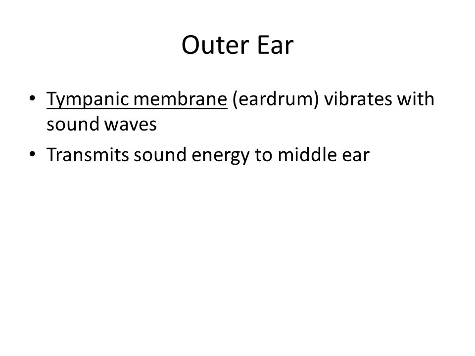 Outer Ear Tympanic membrane (eardrum) vibrates with sound waves Transmits sound energy to middle ear