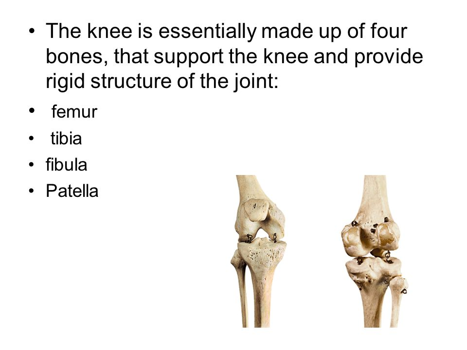The knee is essentially made up of four bones, that support the knee and provide rigid structure of the joint: femur tibia fibula Patella