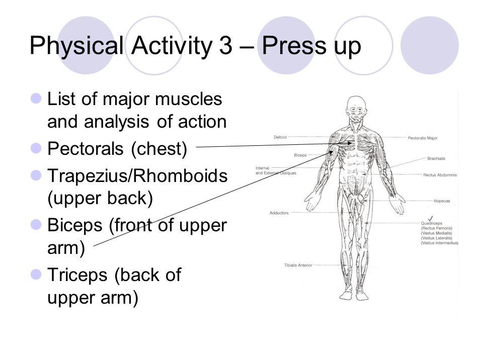 List of major muscles and analysis of action Pectorals (chest) Trapezius/Rhomboids (upper back) Biceps (front of upper arm) Triceps (back of upper arm)
