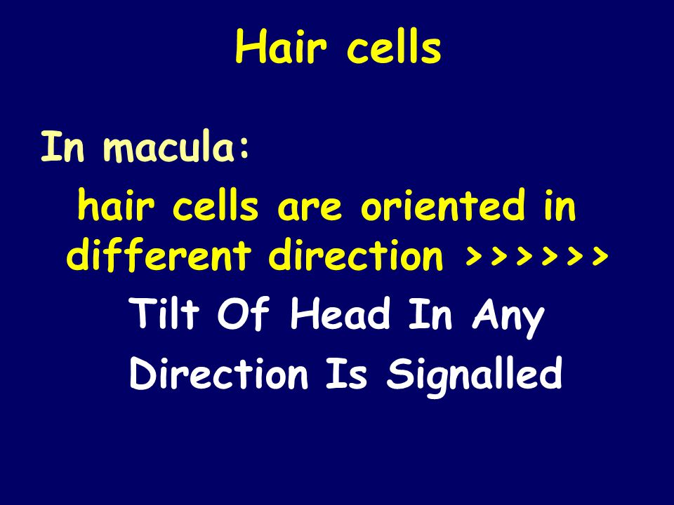 Hair cells In macula: hair cells are oriented in different direction >>>>>> Tilt Of Head In Any Direction Is Signalled